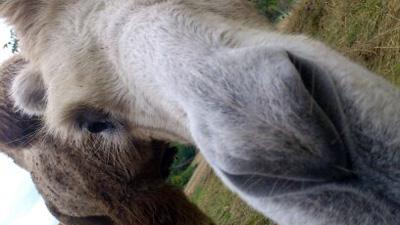 Déambulation de chameaux - Animations et ateliers Terre Nomade
